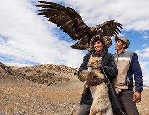 蒙古猎鹰驯化技术面临失传 全世界仅剩下约70名训鹰师