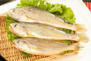 正是吃黄骨鱼的时节----黄骨鱼豆腐汤