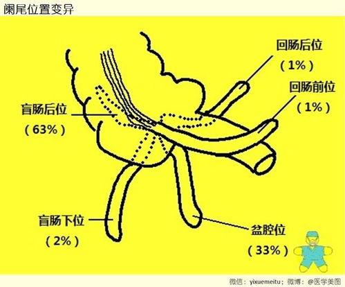 位置 盲腸 【まとめ】人体の臓器の場所を図やCT画像で徹底解説!