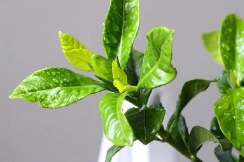 花加出售的养花营养液的功效