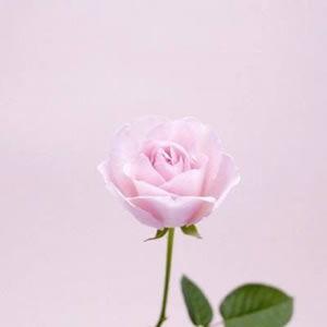 微信头像风景花朵图片