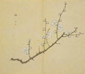清赏 有人把 诗经 里的植物都画了出来