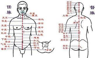 大肠经经络图(手阳明大肠经的十二经)