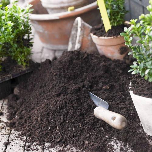 室内阳台养花用营养土还是黄土