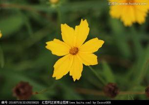 描写小黄花的诗句_描写小黄花的经典诗句
