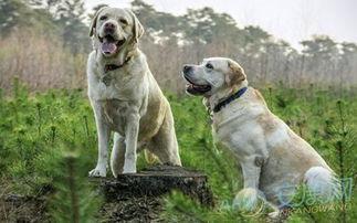 好听的狗狗英文名