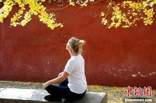 少林寺千年银杏一片金黄 华美壮观禅意萦绕