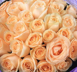 折纸香槟玫瑰把香槟玫瑰花语说给钟情的人听