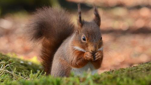 神奇大自然动物世界高清电脑壁纸手机壁纸下载美桌网