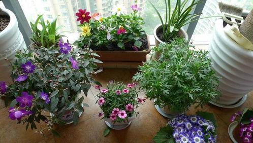 卧室养花用什么花肥