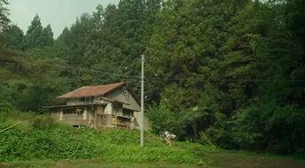 小森是一个很小的村落,这里甚至没有商店,村民如果需要购买生活必需品,主人公市子,决定放弃喧嚣吵闹城市生活,选择回到日本东北地区的老家小森村.