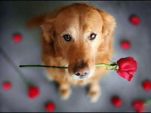 洋气可爱的狗狗名字大全