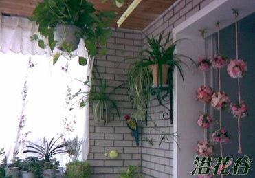 北边阳台养花
