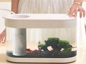 小米鱼缸怎样养花