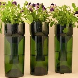 酒瓶怎样养花