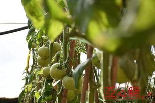 乌鲁木齐米东区有养花大棚吗