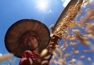 英年度环境摄影师奖参赛作品 揭示世间百态