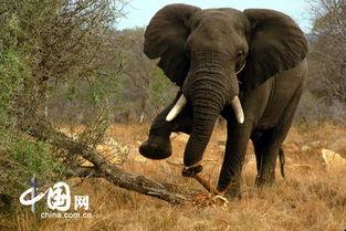 史上最牛的摄影作品 南非动物大赏 组图