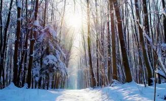 描写春夏秋冬景色的成语和古诗