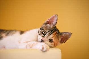 那个小猫咪的大全