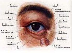 过敏性结膜炎,睑结膜炎门诊患者 陈主任您好,现在眼睛看东西有点模糊,和药量有关系吗... 好大夫在线诊后报到