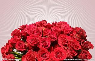 十一枝玫瑰花的的话语