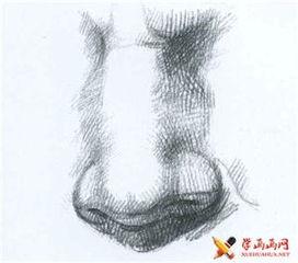 素描鼻子的结构及画法 手机学画画网 国内最大的画画教程资源网站