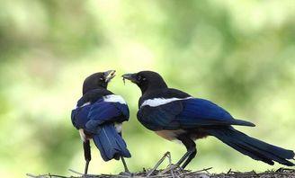 代表情侣的鸟都有哪些