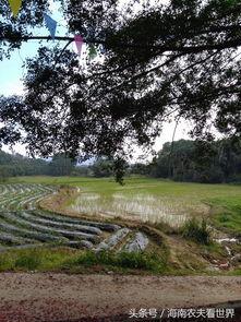 ...往的诗和远方的田野 割胶,摘槟榔,放黄牛 欢迎访问北京农业职业...