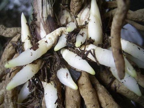 桔子皮能养花当肥料吗
