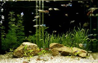 鱼缸养花的风水禁忌
