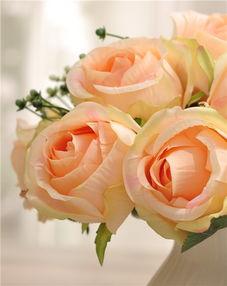 香槟玫瑰的花语寓意 香槟玫瑰贵不贵