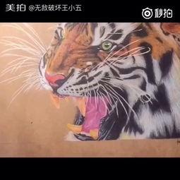 我要上热门 手绘彩铅画 老虎 周末画的 喜欢的朋友点赞 无敌破坏王小五的美拍