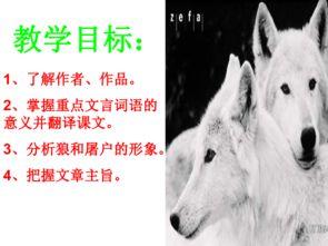 前怕狼后怕虎一致的四字词语