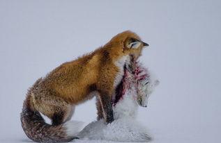 英世界野生动物摄影大赛结果出炉