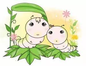 关于蚕宝宝的小知识