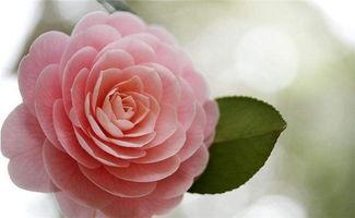 养花的主人秀于花