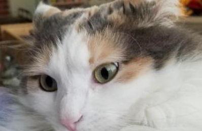 什么品种的猫咪适合小孩子养