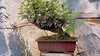 东北黑土能养花吗
