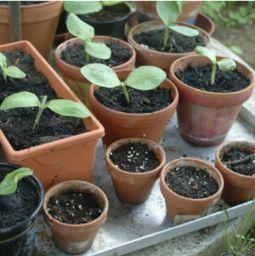 怎么制作熟土养花