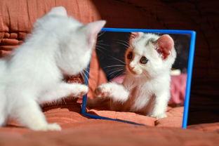 如何看清是猫咪是公的还是母的