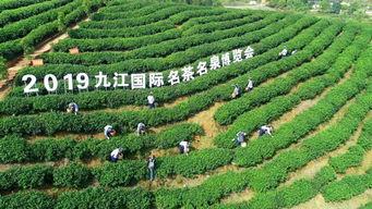 九江茶叶市场