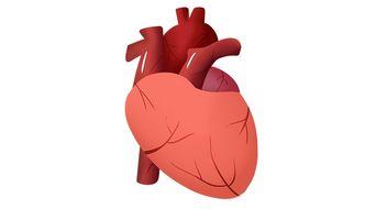 心 五行属什么(人体有五行,心属金,肝属木,脾属水,肾属火,肺属土,为什