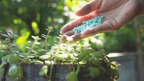 农村肥料可以用养花吗