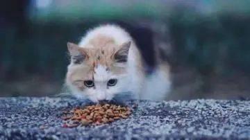 流浪猫大面积猫癣怎么办