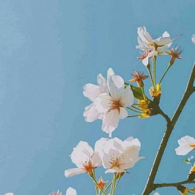 微信头像花朵淡雅