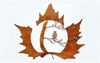 树叶的艺术