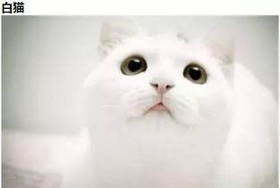 毛色猫咪的个性签名