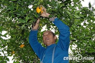十二五 成就看安康 特色农业打开致富门