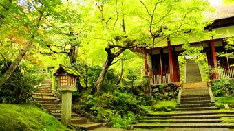 日本京都竹林旅游攻略